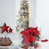Le poinsettia décore la table de Noël