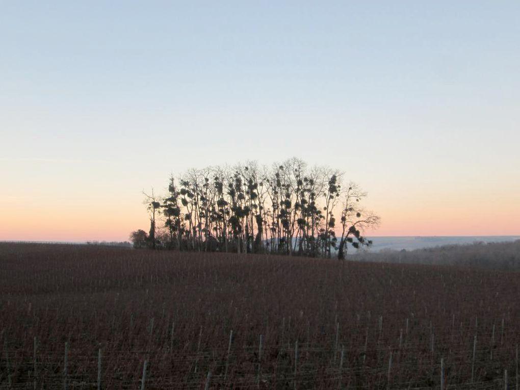 Rando Courcelles-sapicourt-2016