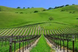 Le Vignoble de Californie