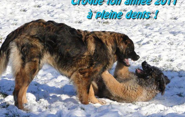 Belle et douce Année 2011.....