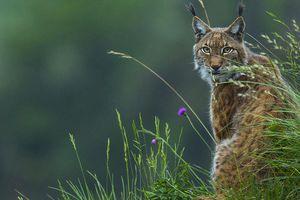 Des solutions existent pour protéger la nature