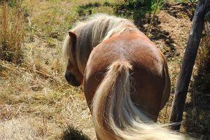Quelle proportion de fourrage est souhaitable dans la ration d'un cheval ?