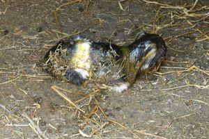 Naissance : viabilité de l'animal nouveau-né