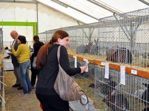 Exposition d'aviculture à Algrange en 2015