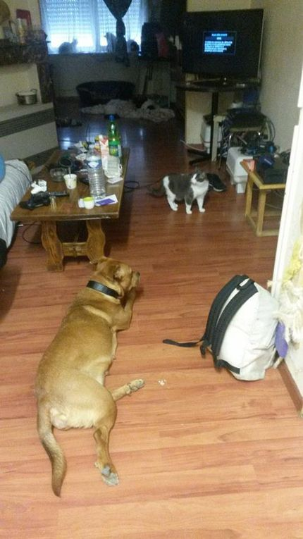 SIMBA est adoptée !!! : très gentille chienne de 2 ans