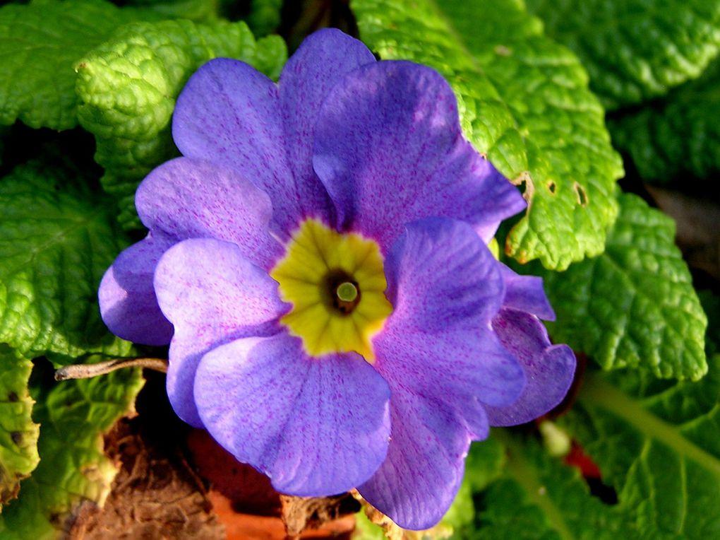Une première floraison est un rendez-vous toujours attendu avec émoi et curiosité !