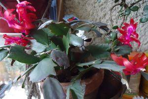Le Clos Fleuri en Février .......