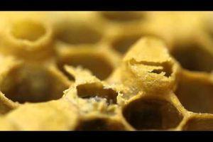 Découverte des abeilles chez Mimi