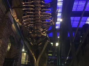Le muséum d'histoire naturelle et son expo du moment qui nous parle et nous montre le monde des abysses
