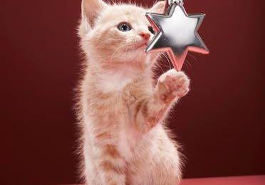 4 conseils pour passez un joyeux Noël avec son chat