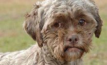Abandonan perro por tener cara humana....