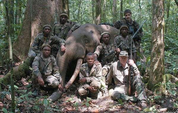 Peter Flack, un administrateur du WWF, pose avec un éléphant de forêt mort.