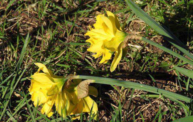 Le printemps n'est pas loin - 1