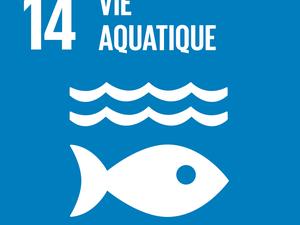 Vie aquatique