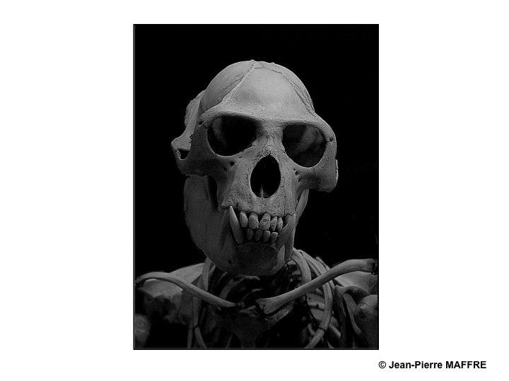 Vivants, ils nous faisaient peur. Morts, ils nous fascinent.
