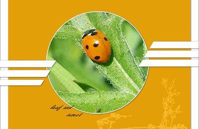 Feuille et insecte.