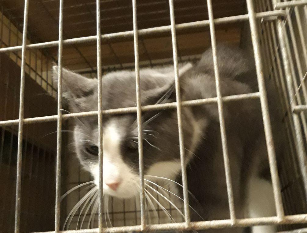 Réservé :  MUFFIN, gentil chat mâle d'environ 2 ans