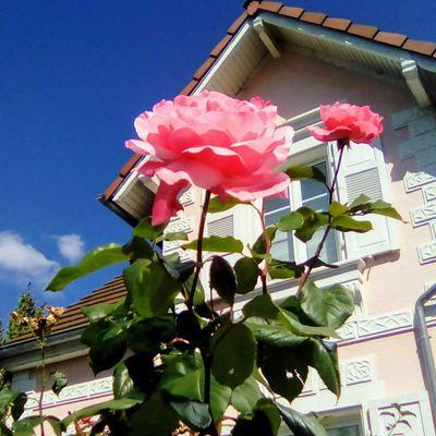 Petite balade dans Cronenbourg