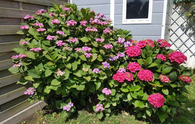 Fleurs d'un jardin Sablais en Juin