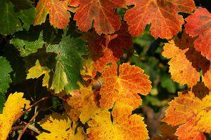 REGIONS FRANCAISES / PROVENCE ... choisir son vin + découvrir les caves et châteaux de la région ( site )