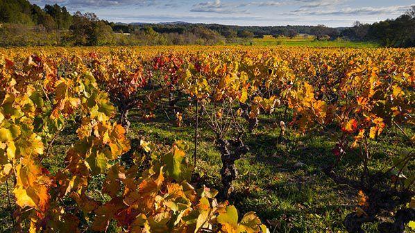 rainfolk conte automne vignes