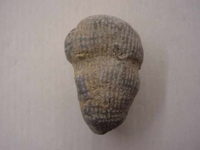 """<p></p> <p>Les éponges fossiles sont, un peu comme les coraux, les mal-aimées des paléontologues amateurs !</p> <p>Pourtant un grand nombre de formes, parfois très esthétiques, peuvent être découvertes dans les sédiments depuis l'Ordovicien jusqu'au Crétacé supérieur, après quoi elles se raréfient.</p> <p>Toutes ces pièces font partie de ma collection personnelle.</p> <p>Bonne visite !</p> <p>Phil """"Fossil""""</p> <p></p>"""