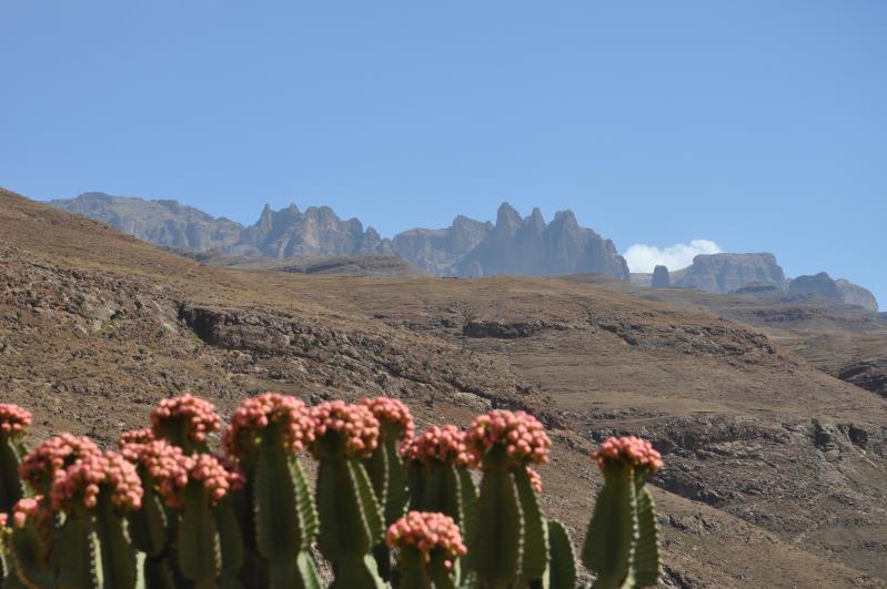Ethiopie, monts Simien, descente du col de Bwahit sur la Mesheha Wenz