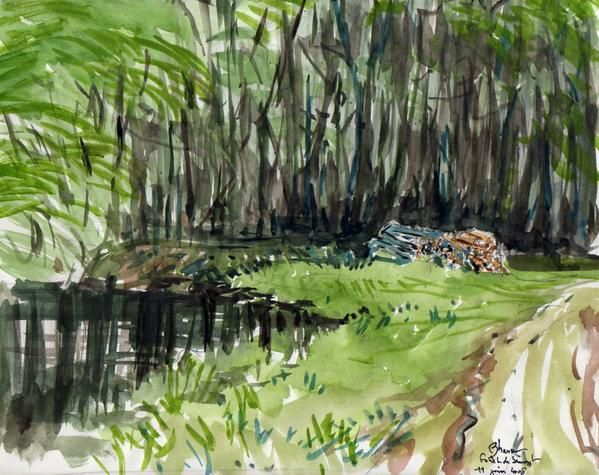 Ce sont mes petites captures dans la forêt le matin ou de la drôlerie de la vie.