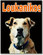 Loukanikos un chien contre l'austérité...
