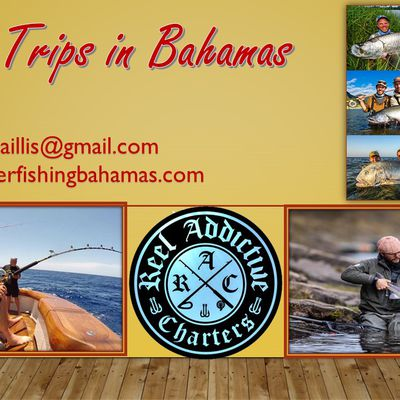 Experience the Fantastic Feeling of Fishing Trips in Bahamas