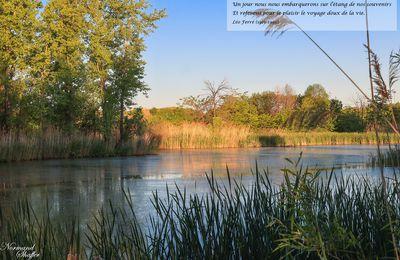 No. 200 : L'étang de nos souvenirs (1re juin 2021)