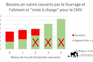 Impact du confinement : Le cheval de sport au box