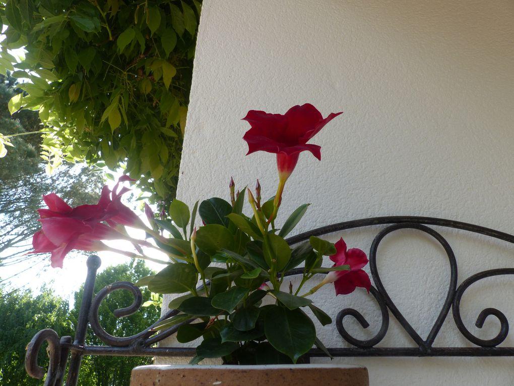 Les fleurs de mon jardin.