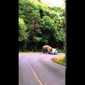 คลิปช้างเขาใหญ่ เหยียบรถนักท่องเที่ยว อย่างระทึก!!