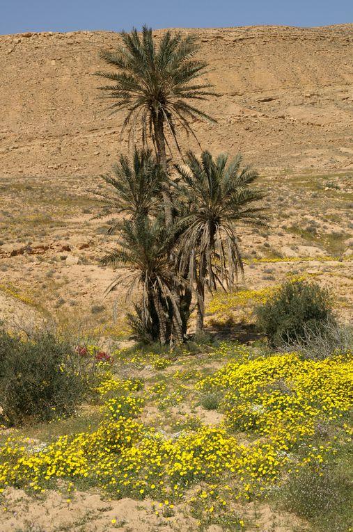 TUNISIE ... Trans Oasis Sud Tunisien