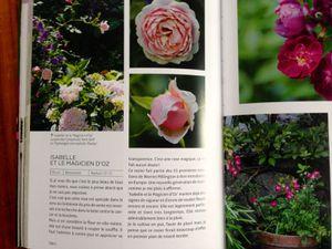 """""""Roses"""" de Isabelle Olikier-Luyten"""