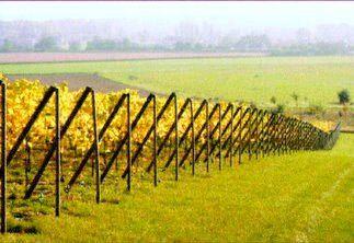 Le Fil rouge 2010, Un vignoble en Normandie. par Michel Bindault