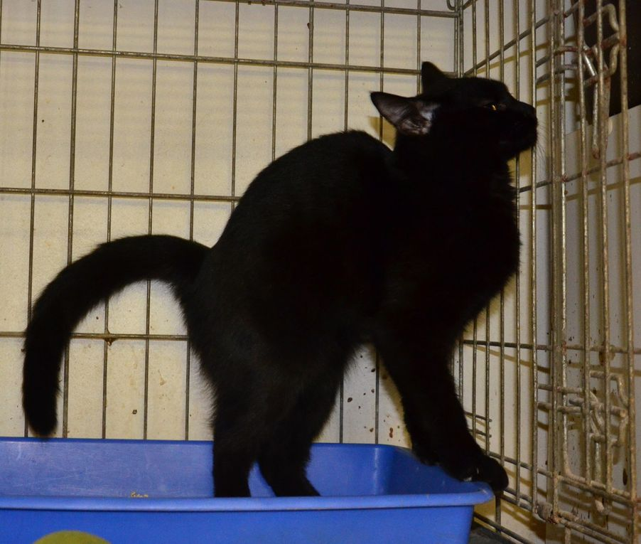 Il est adopté !!! : ARIEGAL, mâle castré de 8 mois, très timide