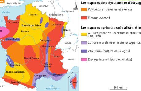 Activité 6ème # L'agriculture en France