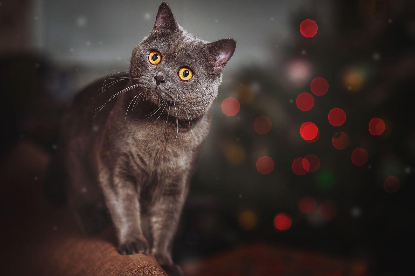 Un Noël sans danger avec son chat