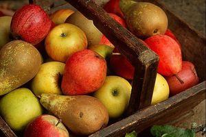 Commande de fruits d'hiver