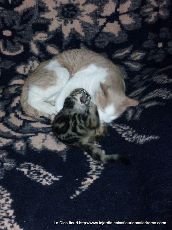 """Photos du petit chat """"Petiote"""" trouvée dans le jardin le jeudi 21-11-2019"""