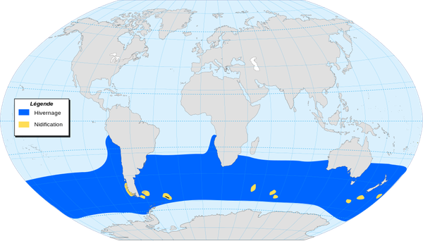 Black-browed Albatross world map distribution