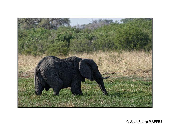 Les animaux sauvages sont chez eux au Botswana. Près de 40 % du pays est constitué de réserves et de zones protégées.