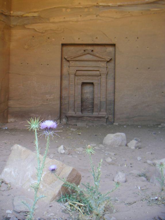 Tour de la Jordanie en touriste de base, mais une première approche qui donnera l'envie de mieux connaître ce merveilleux pays, berceau de l'humanité, ... et surtout de revenir à Petra et dans le Wadi Rum ...