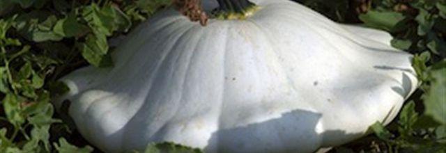 La courge, un légume d'automne excellent pour la santé