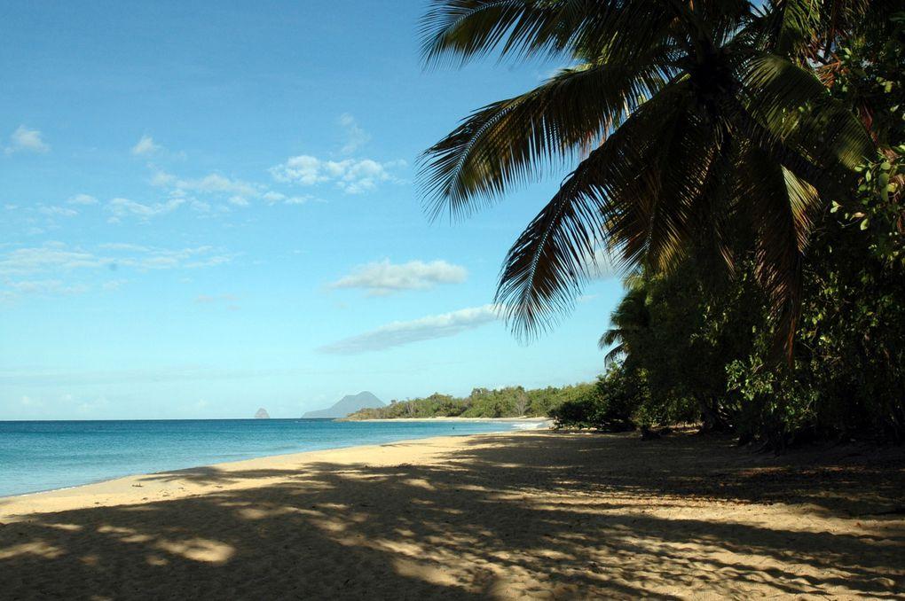 Martinique, plage des Salines, 8 heures du matin/ 马提尼克岛