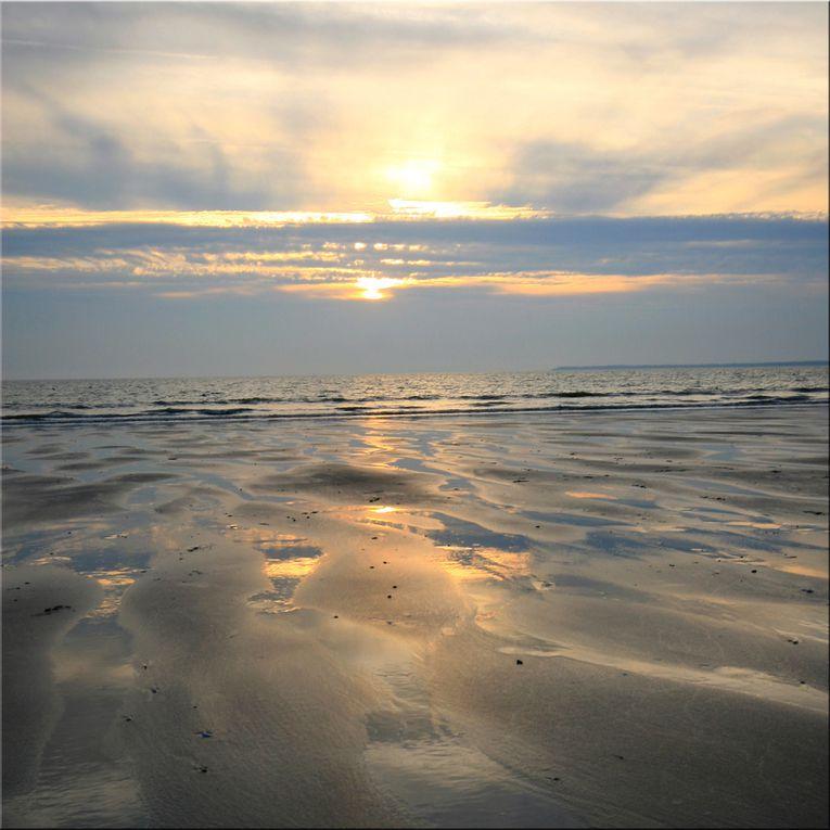 Album - Maree Basse