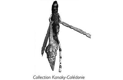Un point de vue sur nos éditions et la collection Kanaky.Calédonie