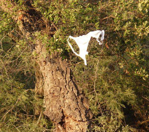 """Quelques images en diaporama (merci à Jacques Hercelin) . La quatrième photo résulte d'un gag imprévu dans la chanson """"Les bretelles"""": un soutien-gorge volant s'accroche aux branches. De quoi vexer l'auteur: c'est ce gag involontaire qui a provoqué les plus gros éclat de rire."""